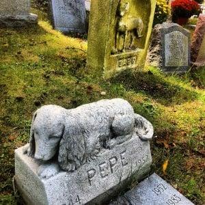Ventajas de un Cementerio de Mascotas