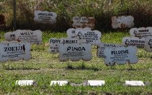 Primer Cementerio de Mascotas del Mundo