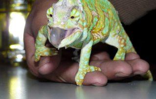 Reptiles: ¿Son en Verdad Buenas Mascotas para Los Niños?
