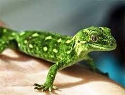 Alimentos de los Reptiles de Mexico