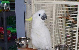 2 Aves Mascotas Exoticas Ideales y Mas Convenientes Para Niños
