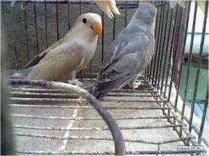 Aves Mascotas Exoticas Ideales Para Niños