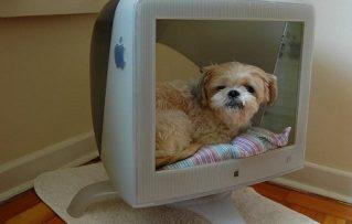 4 Fantasticas Ideas de Camas para Perros Pequeños con Materiales de Reciclaje!!!