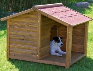 como Seleccionar la Casa de Mascotas Correctamente