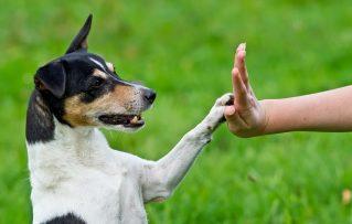 4 Tecnicas Para Dosificar el Amor con la Rigidez en el Adiestramiento Canino