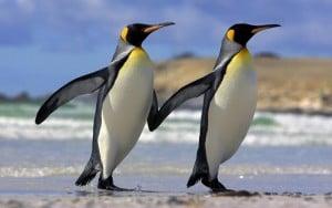 Alimentacion de Los Pingüinos