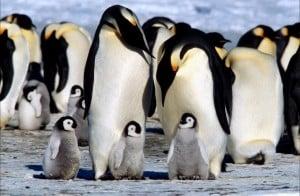 Caracteristicas de Los Pingüinos