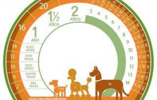 ¿Cómo Puedes Averiguar o Calcular Correctamente la Edad de los Perros por Raza?