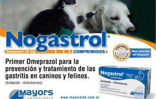 7 Efectos Beneficos y 3 Adversos del Uso Veterinario del Omeprazol para Perros y Gatos