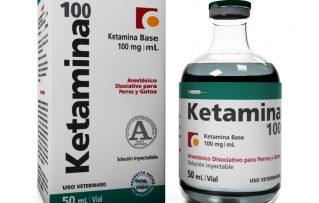 10 Condiciones donde la Ketamina en Perros Viejos no Debe Ser Administrada
