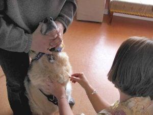 Ventajas de la Ketamina en Perros y gatos