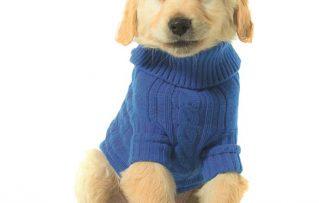 7 Sencillos Pasos Para que Usted Haga su Propia Ropa Para Perros Pequeños