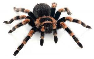 Beneficios de los animales exoticos de mascotas