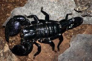 Animales exoticos en peligro de extension