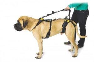 Cómo Elegir un Arnés Para Perros Grandes