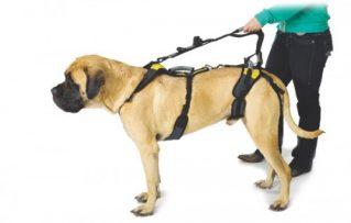 10 Tips para Aprender a Cómo Elegir Correctamente un Arnés Para Perros Grandes!!!