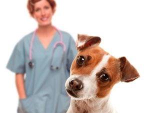Riesgos de la Esterilización de Perros Hembras