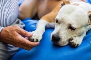Beneficios de la Esterilización de Perros gratis