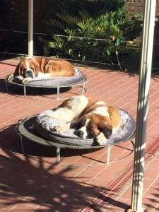 Ventajas de trampolines para perros en alquiler