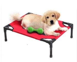 conoce los mejores trampolines para perros en venta