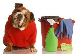 Como eliminar el Olor de Orina de Perro en Alfombras