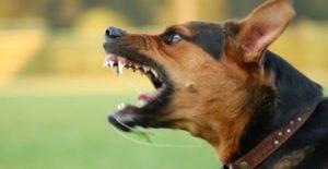 Detalles a Tomar en Cuenta con una Mordida de Perros