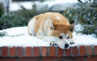 Conozca 4 de los Perros más Famosos en la Historia Mundial