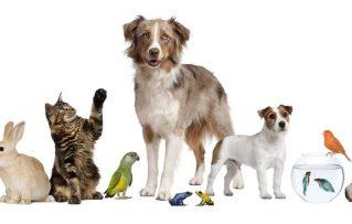 15 Ideas de Cómo Preparar el Alimento Para Aves Casero y para Otras Mascotas