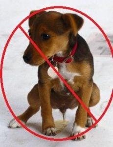 Repelentes para Perros de Origen Natural