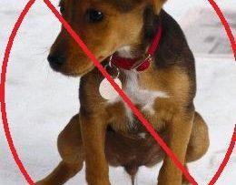 5 Excelentes Repelentes para Perros de Total Origen Natural