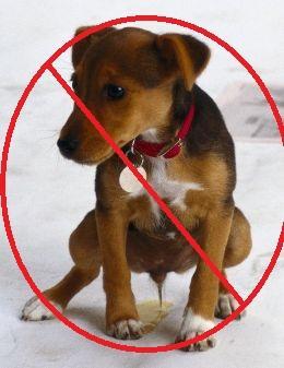 repelentes para perros