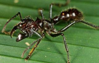 Los 10 Insectos más Peligrosos y Mortales del Mundo!!!!