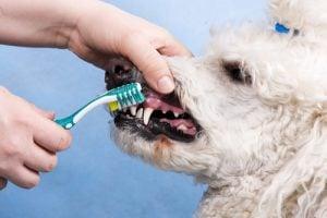 Cuidado de los Dientes de los Perros