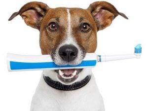 Higiene de los Dientes de los Perros