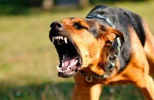 Tratamiento Conductual de un Perro Agresivo