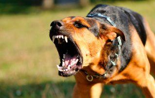 3 Áreas Principales para el Tratamiento Conductual de un Perro Agresivo