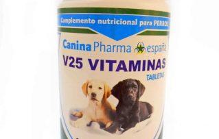 4 Aclaratorias sobre los Beneficios de los Suplementos y Vitaminas para Perros