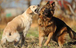 ¿Sabes Cómo Romper o Detener una Pelea de Perros?