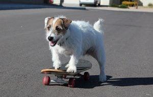 Reglas para Gozar de un Perro bien Entrenado