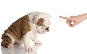 Beneficios de un Perro bien Entrenado