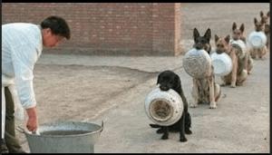 Ventajas de un Perro bien Entrenado