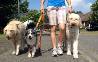 3 Opciones para Pasear su Perro sino Posee Tiempo o Casas con Patios