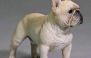 7 Características Positivas del Perro French Bulldog