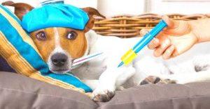 Seguros para Salud de las Mascotas