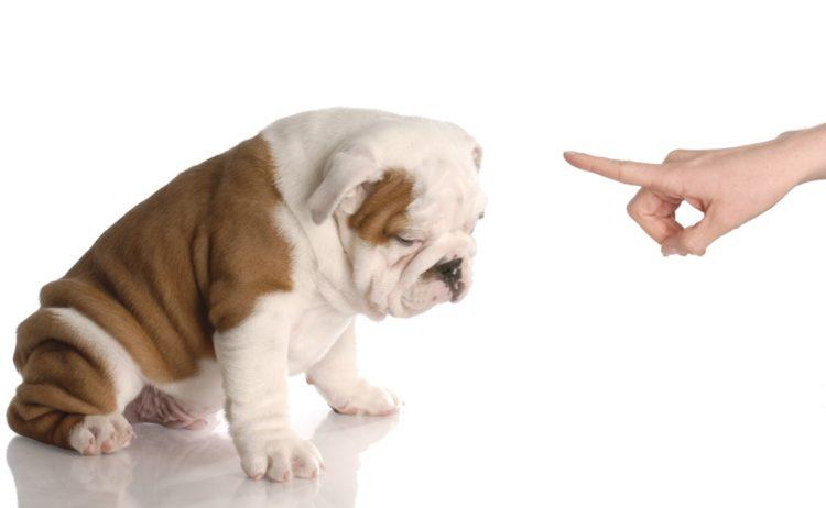 perro bien entrenado