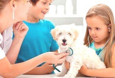 Higiene y Salud de las Mascotas