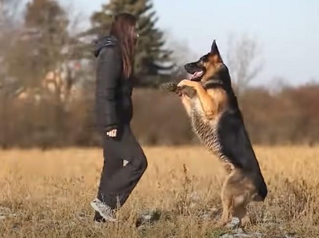 perro inteligente pequeño